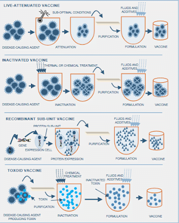 basic concept of vaccination