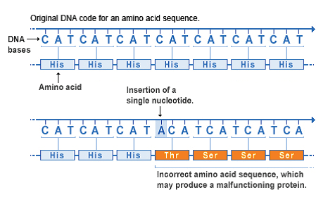 Gene mutation : Types and how they occur