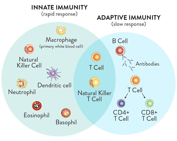 Nonspecific (natural or innate) and cellular immunity in details
