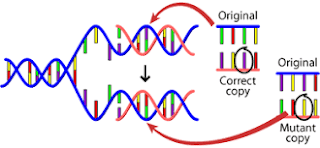 The origin of genetic diseases: Overview on DNA and mutation
