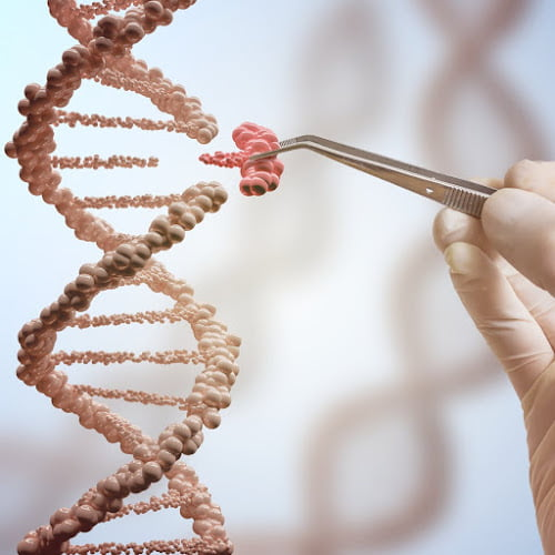 Gene mutation: Effects on protein function, beneficial and harmful mutation