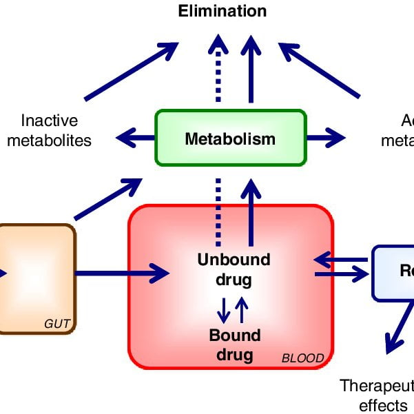 Protein binding of drugs